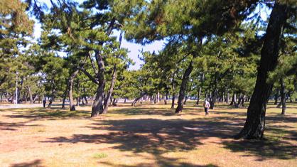 浜寺公園の画像2