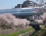 秋ケ瀬緑道