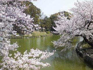 桃ヶ池公園の画像5