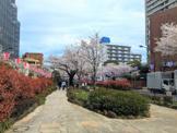 小石川播磨坂さくら並木