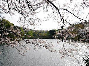 神奈川県立三ツ池公園の画像1