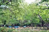 どんぐり山の森緑地