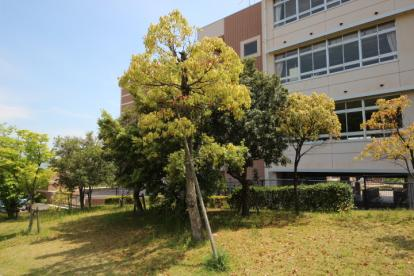 古田台小学校の画像4