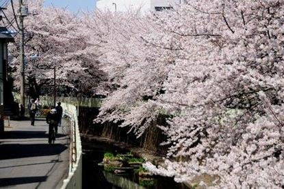 神田川 高井戸東二丁目付近の画像1