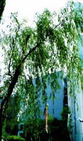 中央区立 泰明小学校の画像2