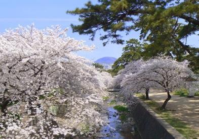 甲山森林公園の画像3