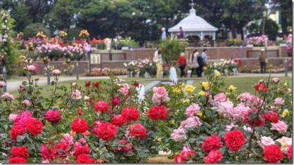 敷島公園 ばら園の画像1