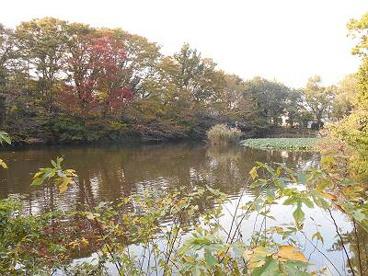 菊名池公園の画像3