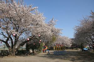 北朝霞公園の画像1