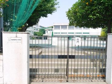 板橋区立 板橋第九小学校の画像3