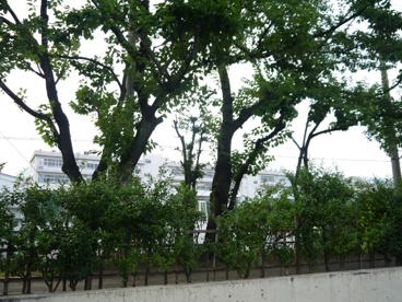 板橋区立 高島第一中学校の画像5