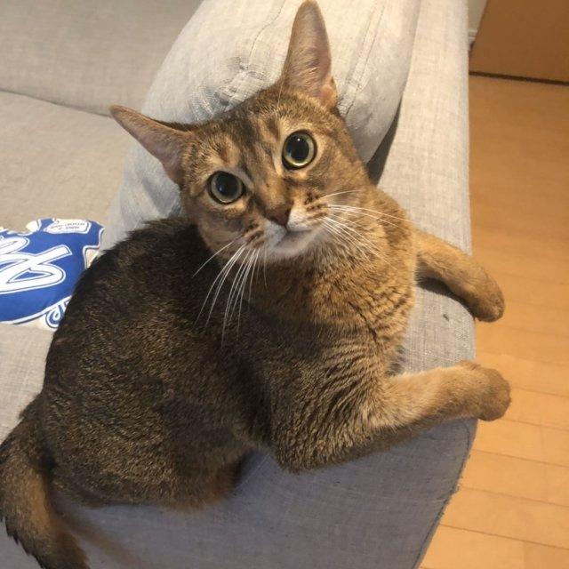 猫スタッフマウ主任の画像