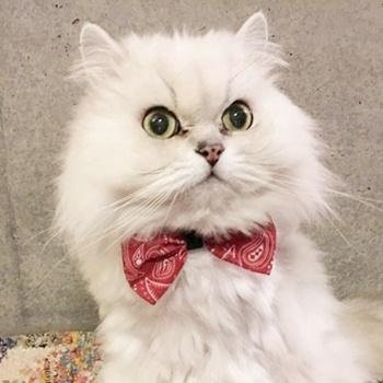 猫スタッフきなり部長の画像