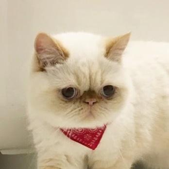 猫スタッフわらび主任の画像