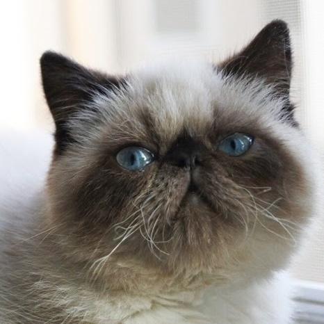 猫スタッフぽんず(アルバイトさん)の画像